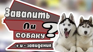 + И - СОБАК