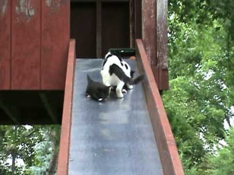 Kittens Learn How Slides Work