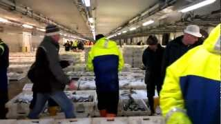 The 12 Days of Fishmas - Day 11 Peterhead Fish Market