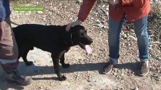 Быстрые и ловкие: служебные собаки показали свое мастерство в поиске пострадавших