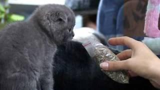 Все О Домашних Животных: Успокоительное Для Котов