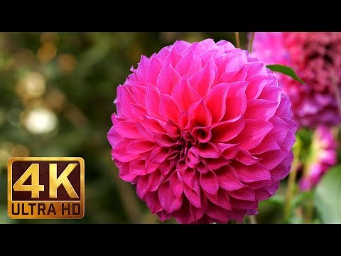 4K Nature Footage - MACRO FLOWERS with natural sounds /Part 1/ TRAILER
