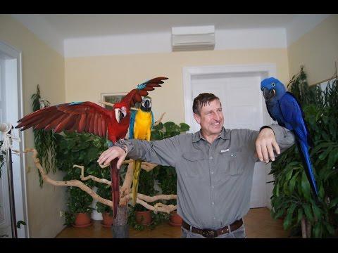 Václav Vydra - zážitek s papoušky