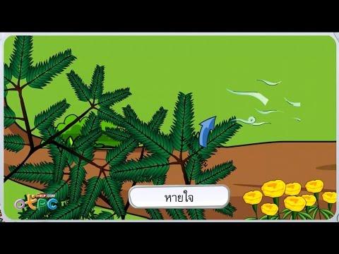 พืชในท้องถิ่น - วิทยาศาสตร์ ป.1