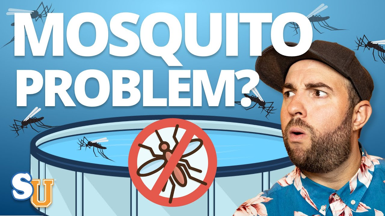 How To Keep MOSQUITOES Away From Your POOL   Swim University