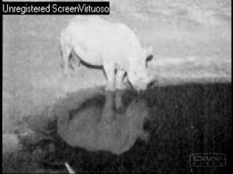Hyena Sniffs Mr. Rhino's Bum 08/30/07