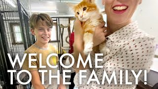SURPRISING THE KIDS WITH KITTENS! 😻😻 : Adventuring Family of 11