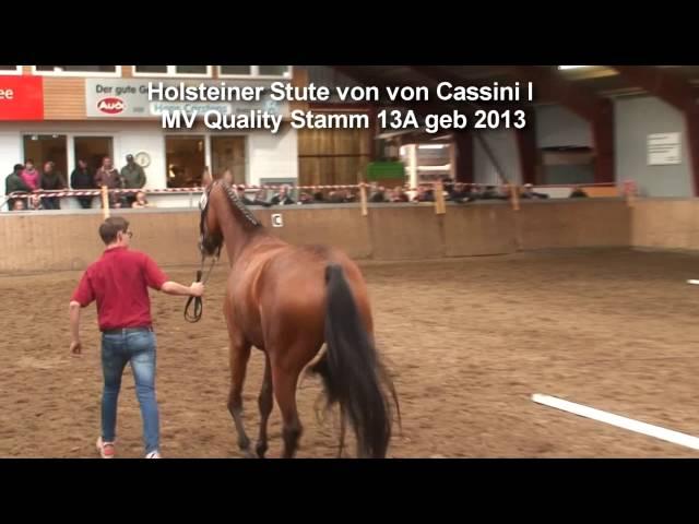Yegua de primera clase del distrito Holstein por Cassini I