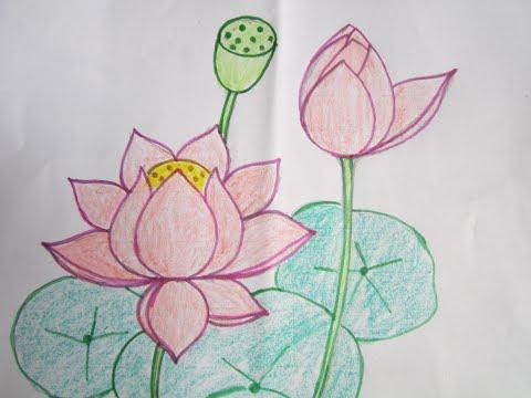 Hướng Dẫn Vẽ Và Tô Màu Hoa Sen đơn Giản Nhất