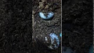 カブトムシの幼虫飼育始めました。 はじめての飼育なのですが、無事に成...
