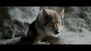 Alfa - Trailer HD Legendado [Kodi Smit-McPhee]