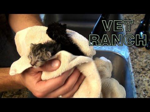 1 Week Old Kittens Rescued