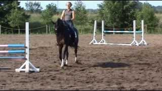Kohinurs (2006) latvian dressage horse for sale