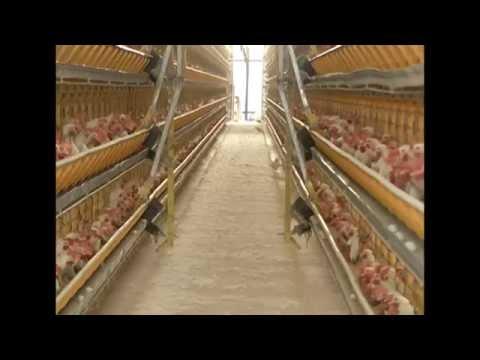 Espaço Rural - Produção de Ovos no ES - 20.12.2014