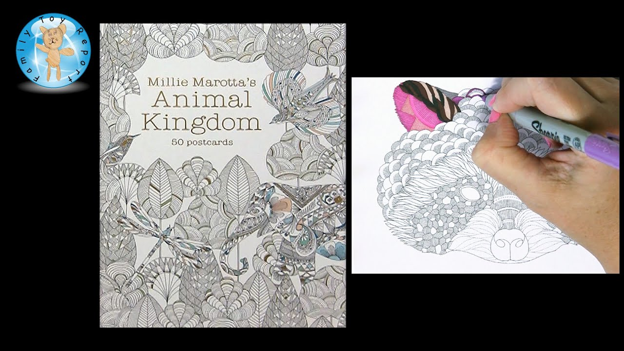 Millie Marotta s Animal Kingdom 50 Postcards Adult Coloring Book Raccoon Family Toy Report ...