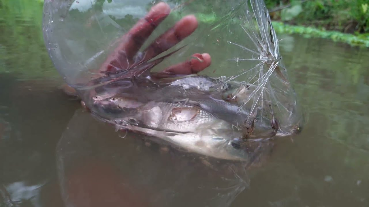 Bottle Fish Trap | Amazing Boy Catch Fish With Plastic Bottle Fish Trap