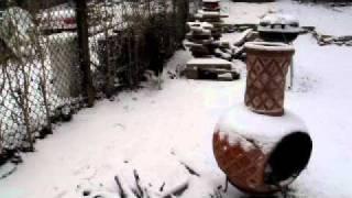 Beagle/Australian Cattle Dog Mixのきびちゃん。初めての雪。 きび子さ...