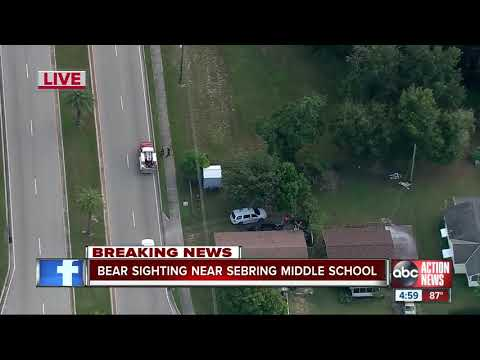 Wildlife officials not allowing anyone to leave Sebring Middle School after bear sighting