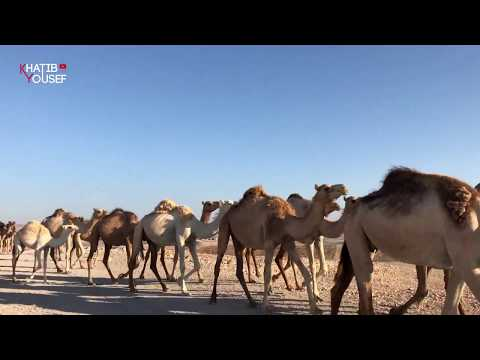 Dead Sea View Experience   مخيم مطلة البحر الميت