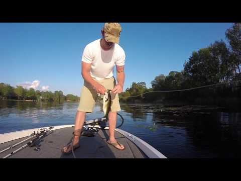 Bass Fishing On Lake Martin And Deerpoint In Panama City Florida
