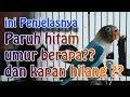 BERAPA HARI PARUH HITAM DI LOVEBIRD MUNCUL DAN KAPAN HILANG || LOVEBIRD farm