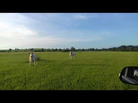 Fazenda A Venda Com 642 Alqueirão Mineiro Na Região De Santa Vitória-MG (Beira De Rio)