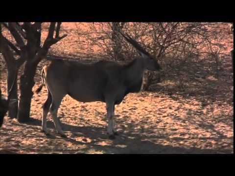 Bushmen Safaris Part 4