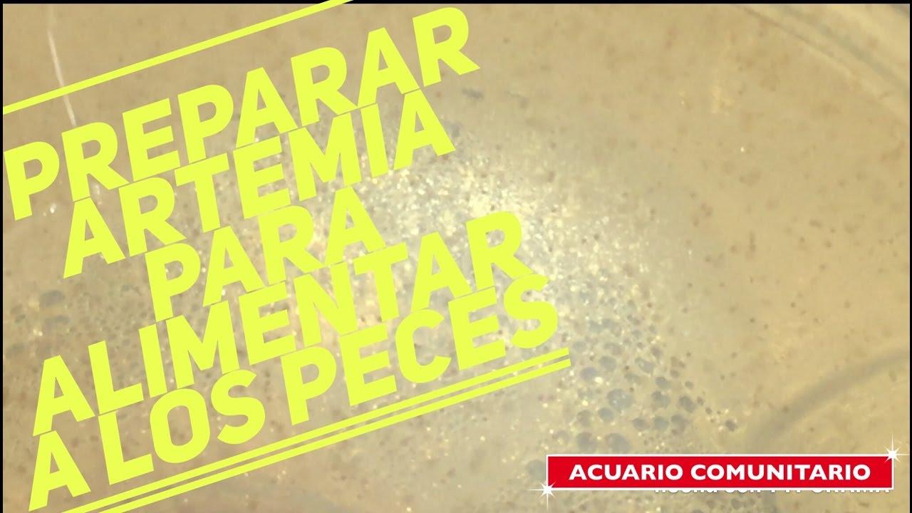 Preparar artemia para alimentar peces alevines youtube for Artemia para peces