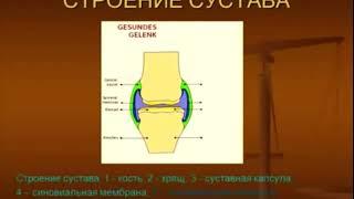 Би Лурон от создателя как и почему действует гиалурон хондроитиновый ком