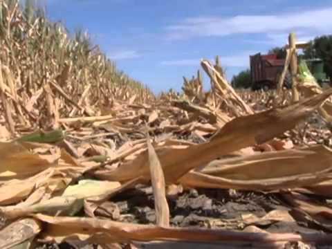 Bg 3.14 = Why Drought?