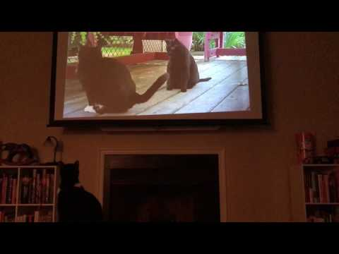 Cat Reacts to Cat Documentary