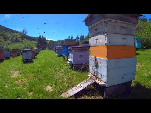 Когда проснуться пчелки или кто пчелок уважает