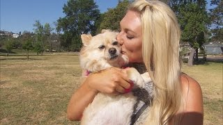 Brooke Hogan Finds Her Missing Pomeranian Wandering Streets Alone