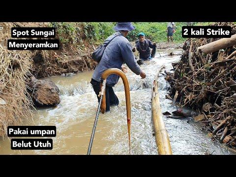 Cara Mancing Sidat Di Sungai   Mancing Sidat Dibawah Rumpun Bambu Sungai   Fishing Eel On The River