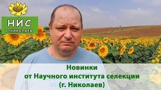 Новинки гибридов подсолнечника от Научного института селекции (г. Николаев)