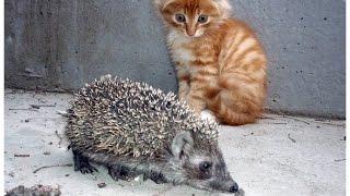 Котенок и ежонок / Kitten and hedgehog