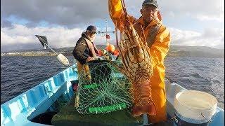 Fishing Lobster / Pesca de lagosta, Pesca de la langosta,  ロブスター釣り 龍蝦釣魚     صيد سرطان