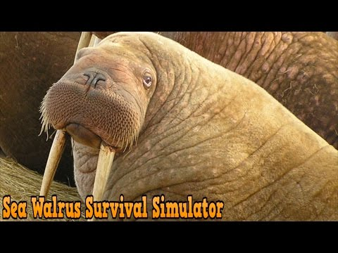 Sea Walrus Survival Simulator By PlayMechanics Simulation - iTunes/Android