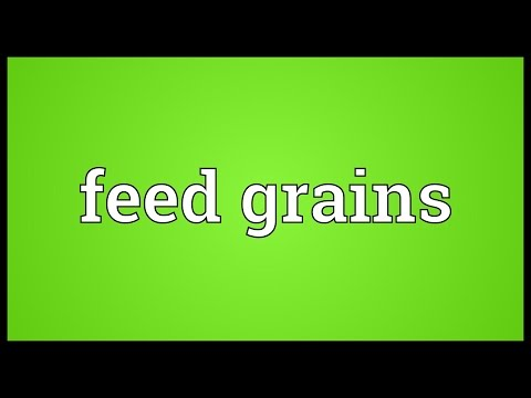 Feed grains Meaning