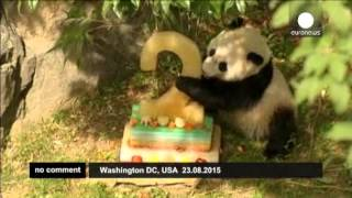 #На день рождения Бао Бао получила торт, подарки и песенку(МОИ ЗАРАБОТКИ ЗДЕСЬ : http://www.youtube.com/channel/UC8hccPAxnDzDty0IfADr3ug Праздничный торт из замороженных фруктов, подарки..., 2015-08-27T12:38:50.000Z)