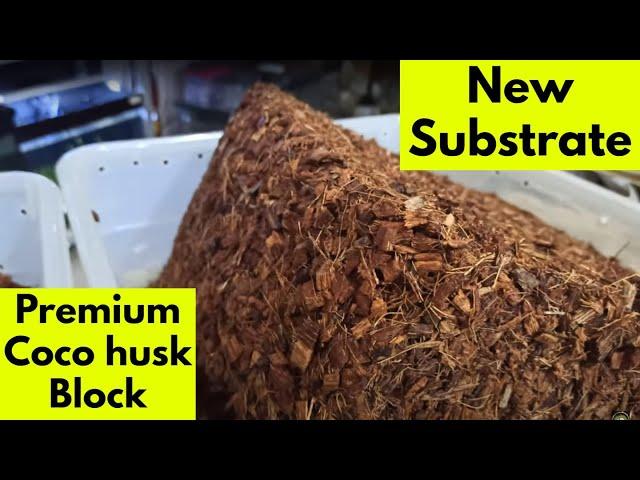 Νέο υπόστρωμα Premium Coco Husk Block της HerpEasy *Promo Video*