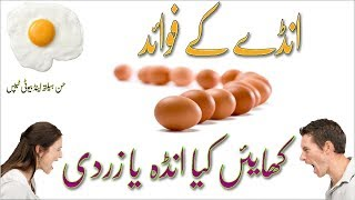 Egg Health Benefits in Urdu-Hindi | Andey Ke Fayde | Egg Ke Fawaid | Egg ke Faide | Ande |