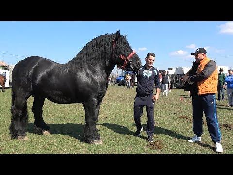 Targul de cai de la Arpasu de Jos, Sibiu 23 Martie 2019
