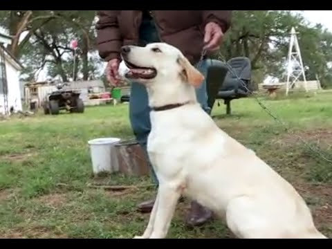 Rob and Hilary - Highs & lows - Dog accidentally shoots woman