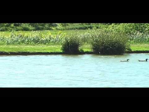 ISLE OF WIGHT HOLIDAYS, Thorncross Farm Carp Fishing Lake