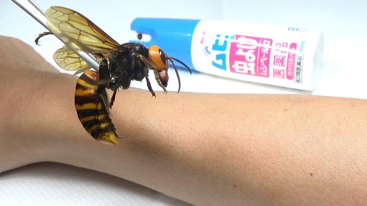 オオスズメバチを虫除けスプレーした皮膚に近づけると...