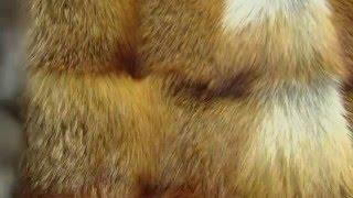 видео Шубы из чернобурки и лисы | Купить шубу из лисы в Москве недорого