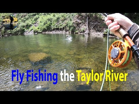 Fly Fishing Colorado's Own Taylor River - Beyond The Fly |  Ep. 1