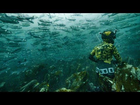 INSANE BASS MEGA SHOAL! Spearfishing UK With Joe PK