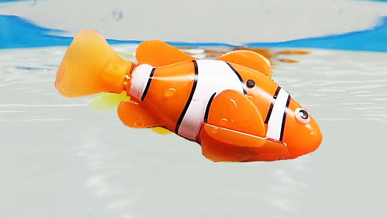Robo fish robotic clown fish like nemo zuru robofish youtube for Zuru robo fish